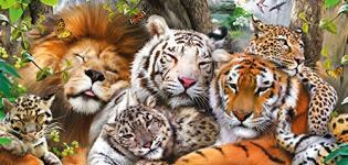 Big-Cats:-felini-XXL-1^TV-Dmax