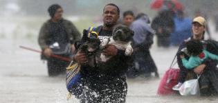 Uragano-Harvey:-SOS-Animali---1^TV-Focus