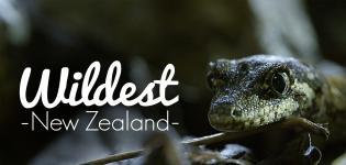 Wildest-New-Zealand-Focus