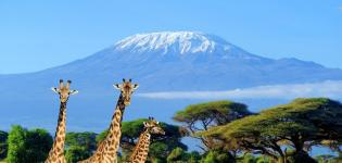 Beautiful-Serengeti-Focus