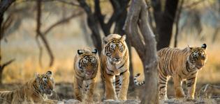 Into-the-Wild:-India-Focus