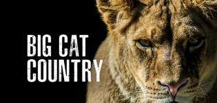 Big-Cat-Country-Focus