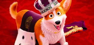 Rex---Un-cucciolo-a-palazzo-Italia-1