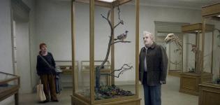 Un-piccione-seduto-su-un-ramo-riflette-sull